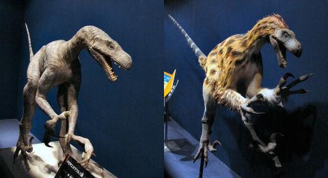 ドロマエオサウルス科 - Dromaeosauridae